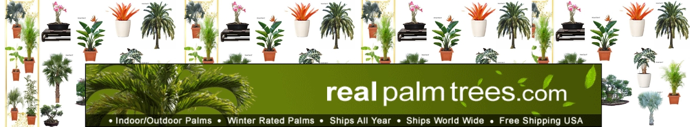 Real Palm Trees Coupons