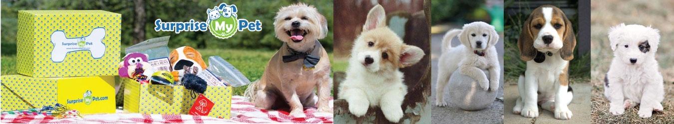 Surprise My Pet Coupons