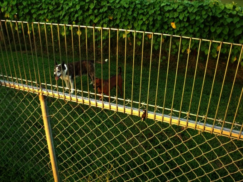 stop dogs from digging under fence